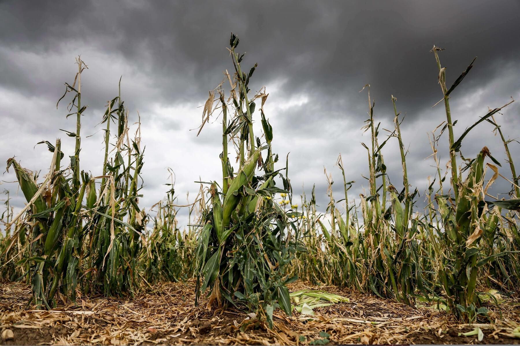 Saiba o que é Seguro Agrícola e como ele funciona