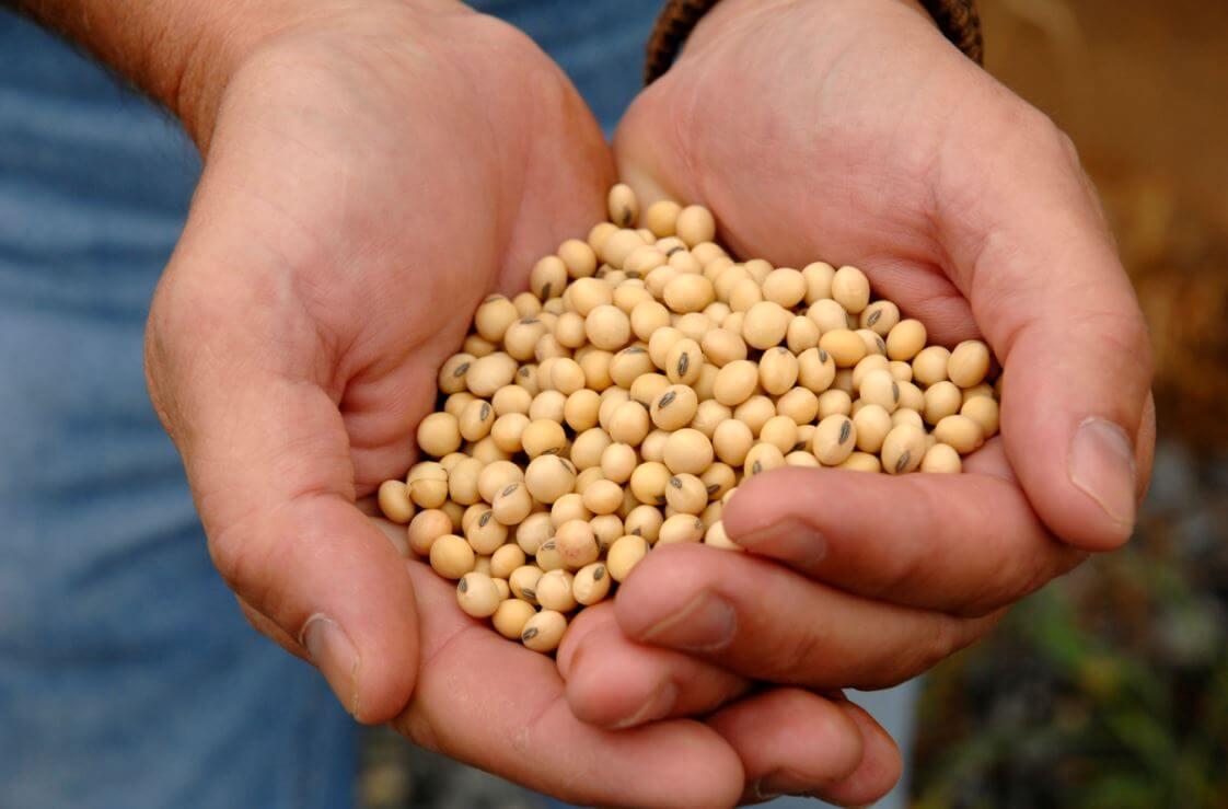 Controle de qualidade de grãos: tipos de danos e medidas de prevenção