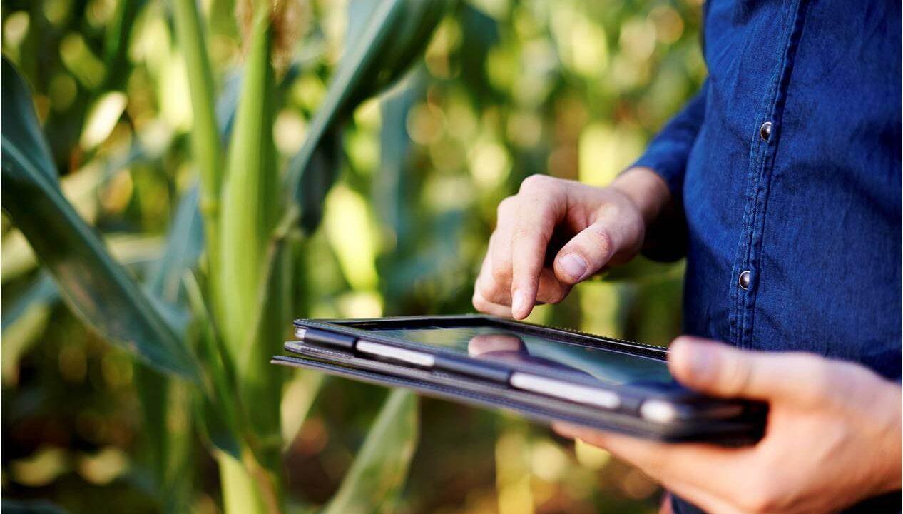 Gestão de Custos da Fazenda: como fazer?