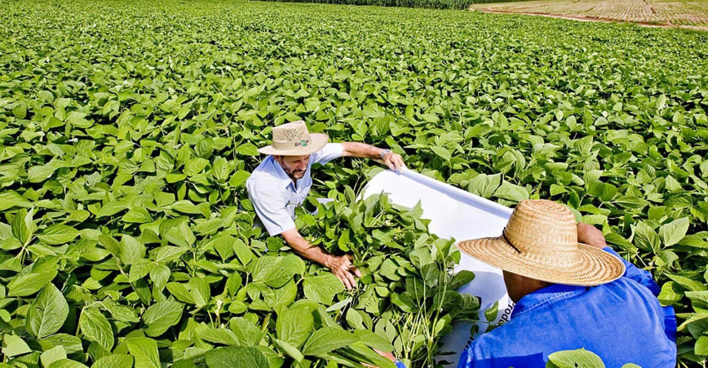 Controle de pragas agrícolas: tudo o que você precisa saber