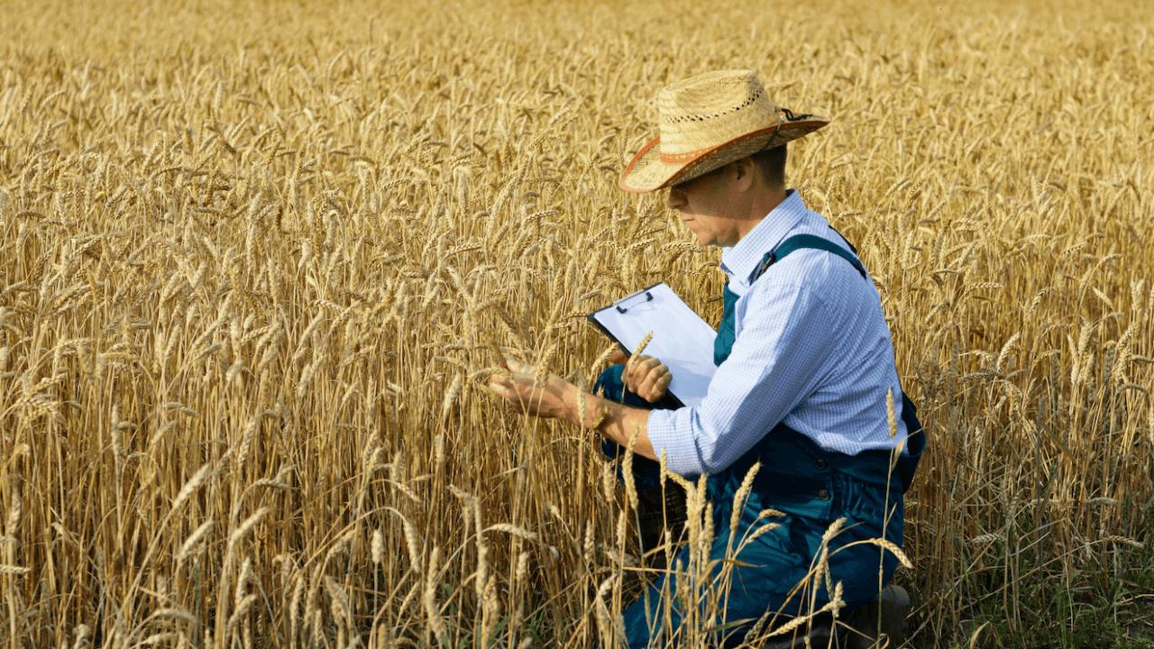 Aposentadoria rural: saiba como funciona e quem tem direito a ela