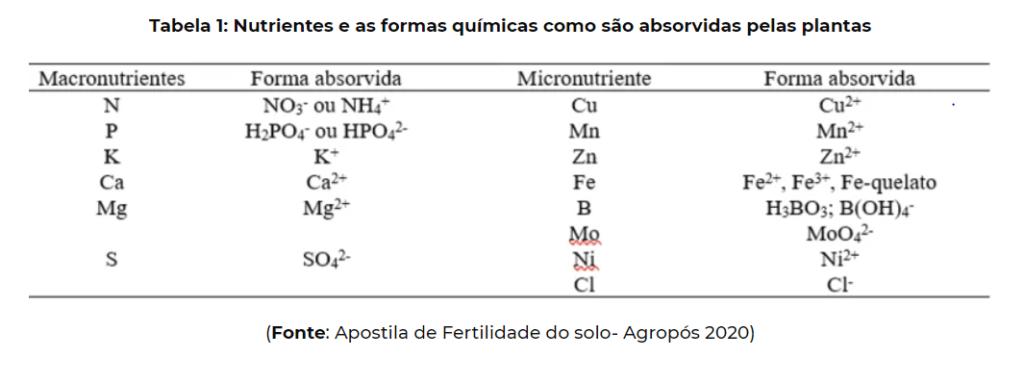 solo fértil - nutrientes