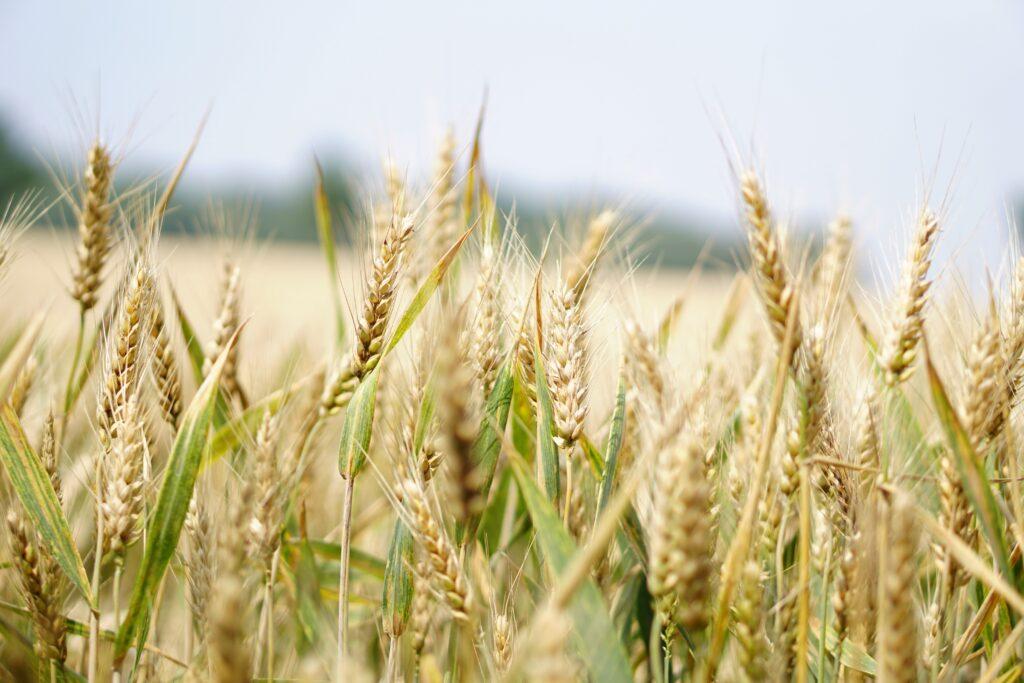 3 dicas para melhorar a gestão rural