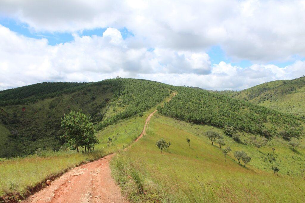 Reflorestamentos - prática que ajuda na sustentabilidade da fazenda
