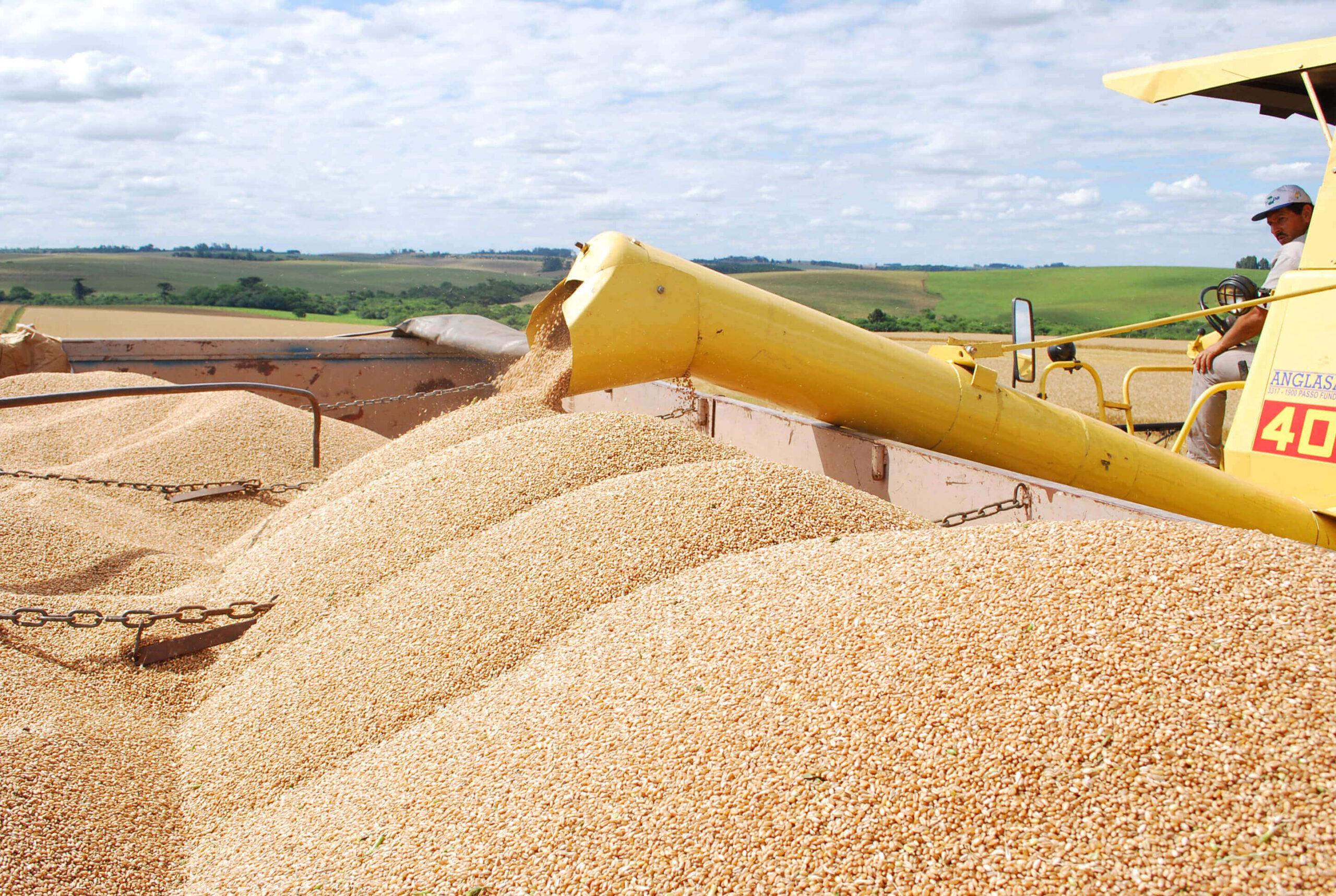 Lavoura de grãos: como manter a produtividade