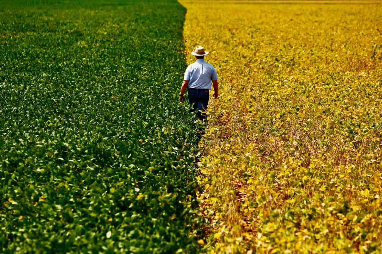 Sustentabilidade no Agronegócio: construindo negócios rurais sustentáveis
