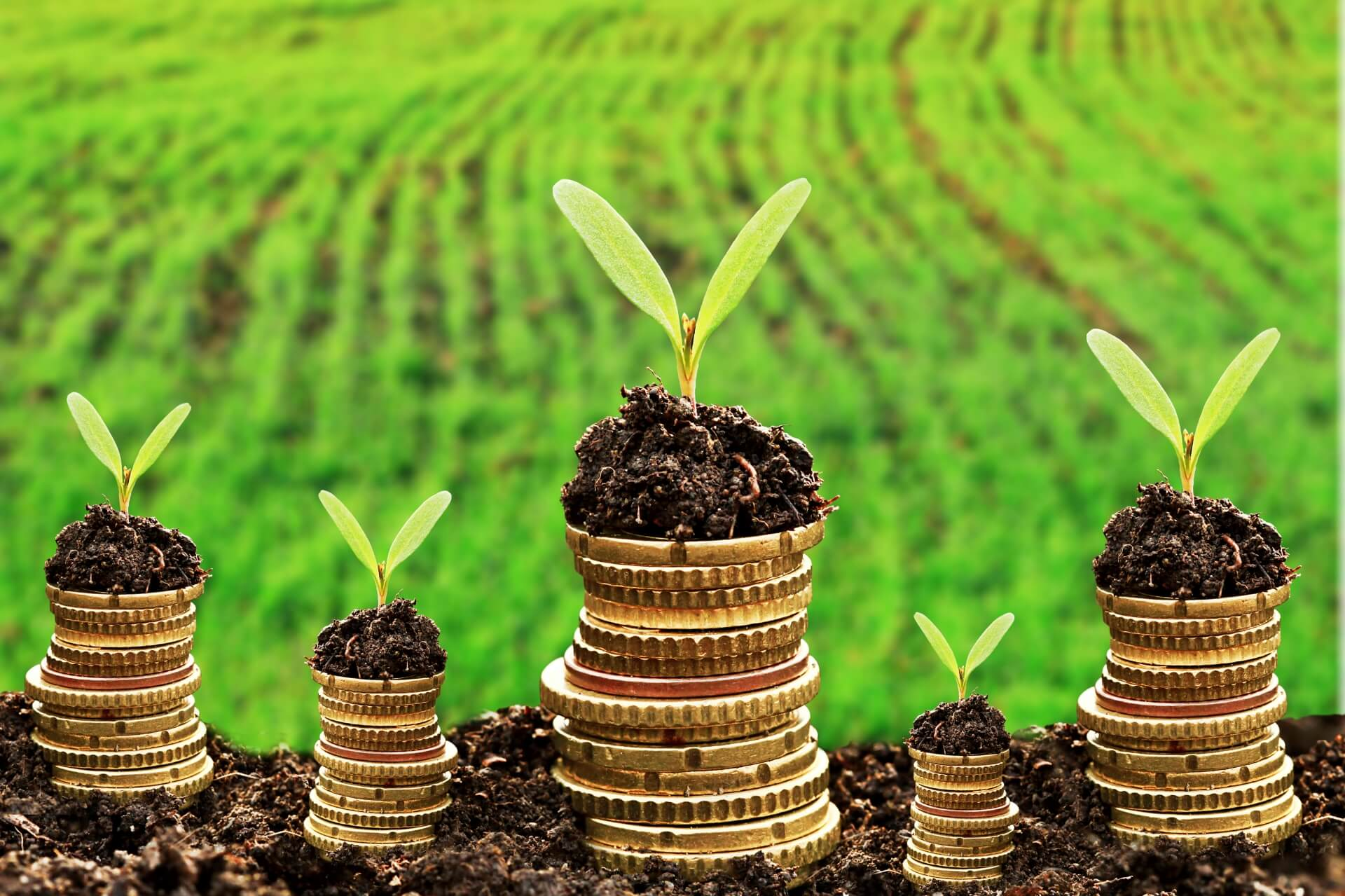 Crédito Rural: o que é e quem tem direito a ele