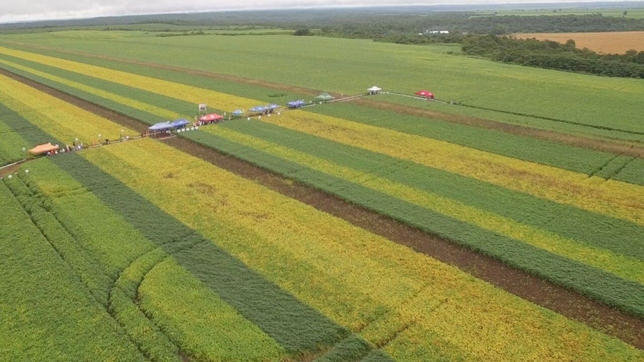 Are, Hectare, Centiare e mais: conheça as unidades de medidas agrárias