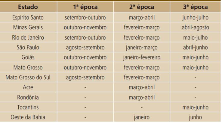 épocas de plantio de feijão no Brasil