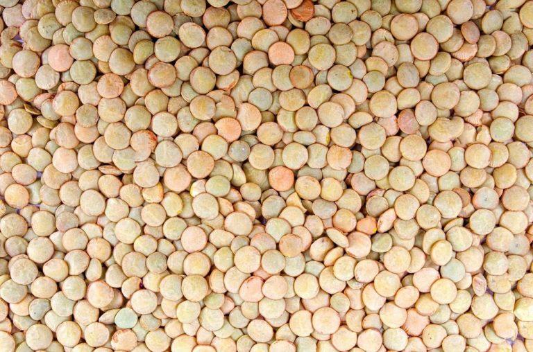 Lentilhas - Tipo de Pulses