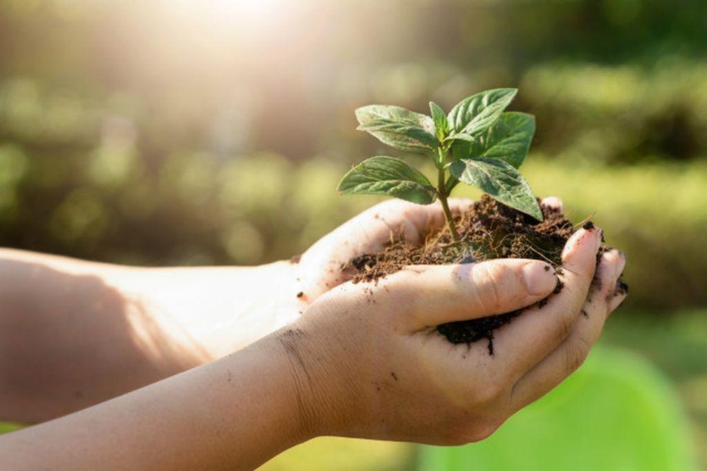 A importância da segurança alimentar: da plantação ao consumo