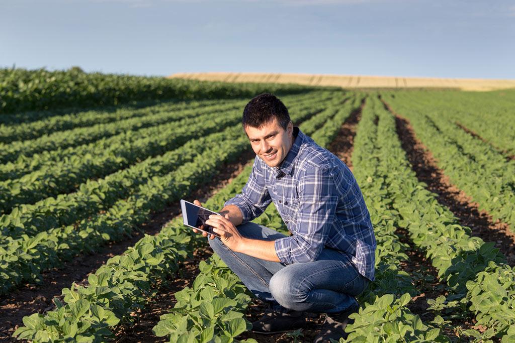 O que é a gestão do agronegócio?