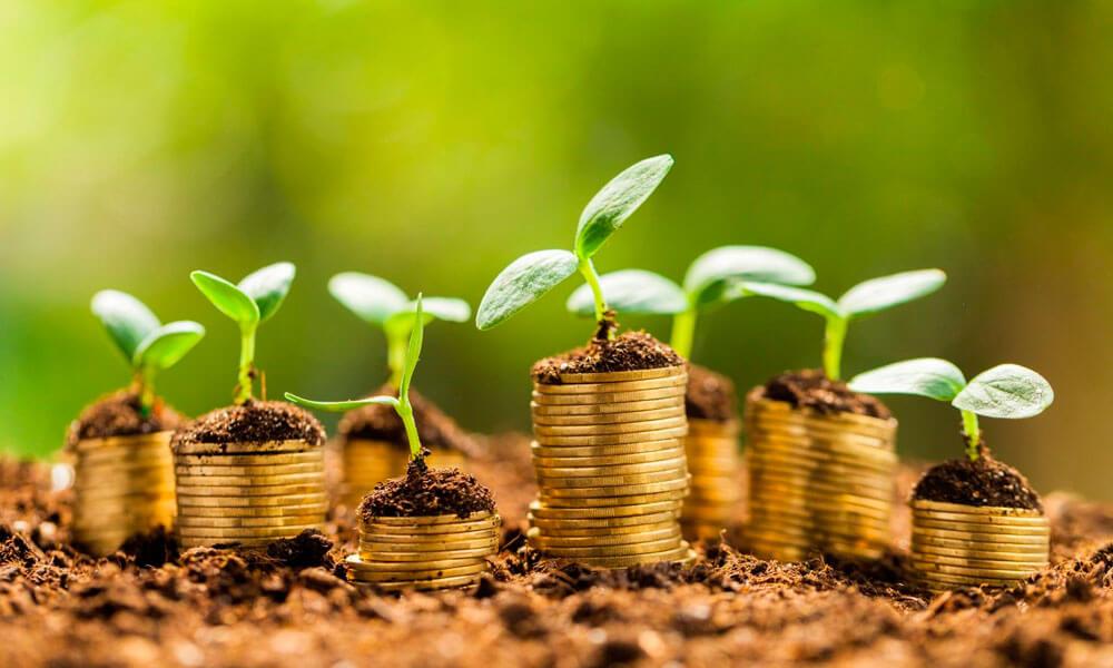 5 dicas para melhorar a gestão financeira da empresa rural