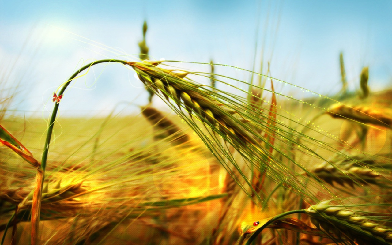 Plantas daninhas do trigo: aprenda aqui como combatê-las