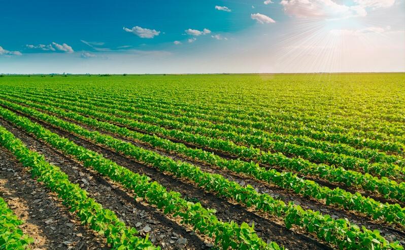 Plantas daninhas da soja: conheça as mais comuns