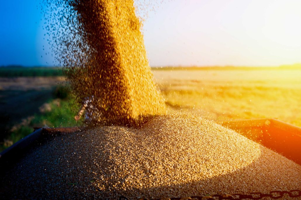 Métodos de amostragem de grãos e seus impactos na safra