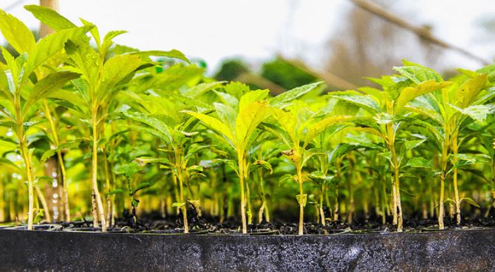 insumos agrícolas - biológicos