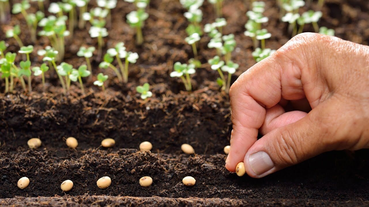 Qualidade de sementes: saiba como garantir