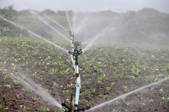 Método irrigação por aspersão - Agricultura irrigada