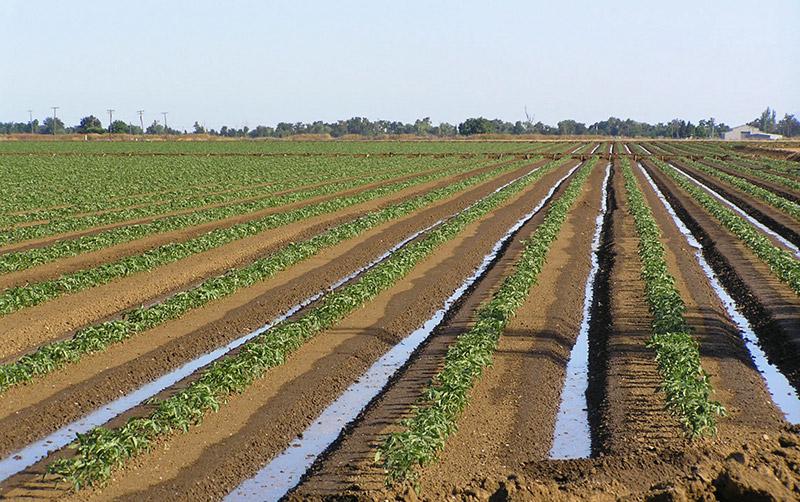 Método de irrigação por superfície - Agricultura irrigada