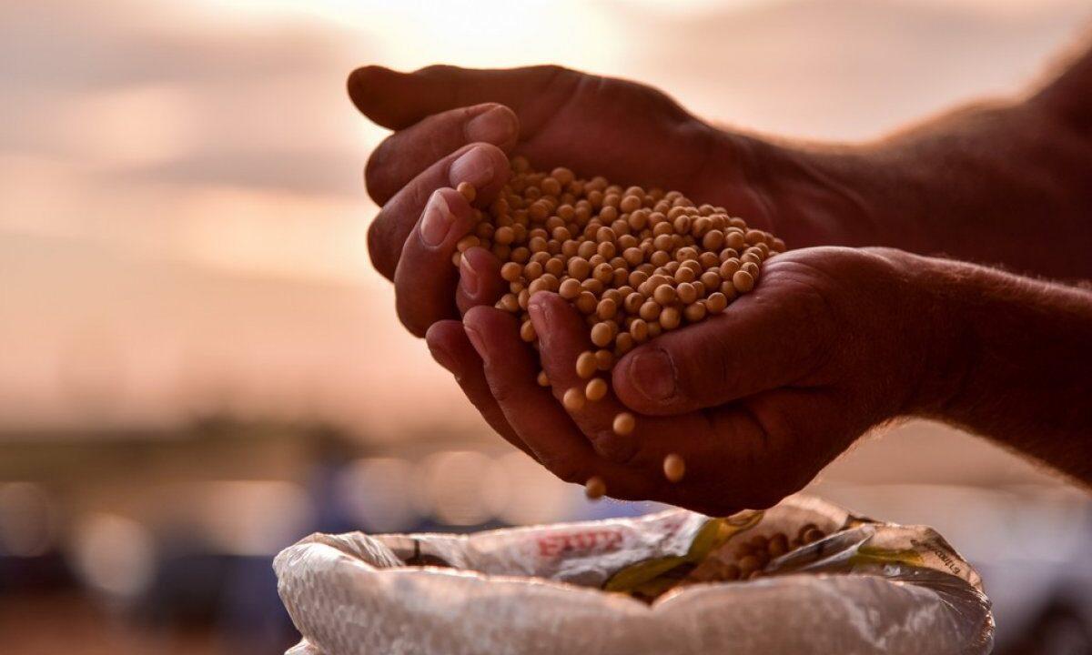 Produção de grãos no Brasil: conheça esse mercado